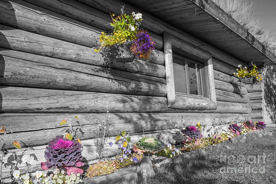 Nenana Visitor Centre,Alaska by Eva Lechner