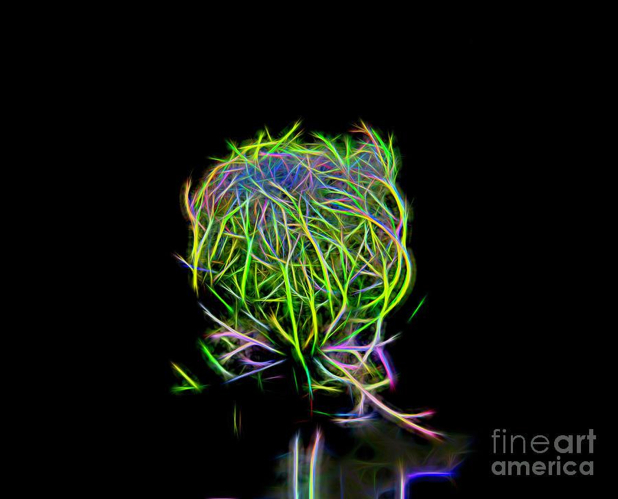 Neon Queen Anne's Lace by Karen Silvestri