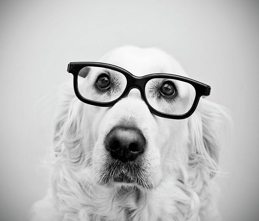 Nerd Dog Photograph by Thomas Hole