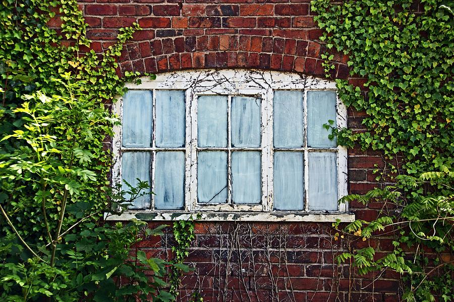 Ness Gardens.  Window. by Lachlan Main