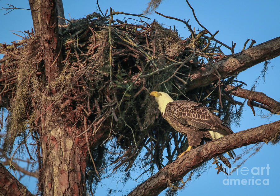 Nest Check by Tom Claud