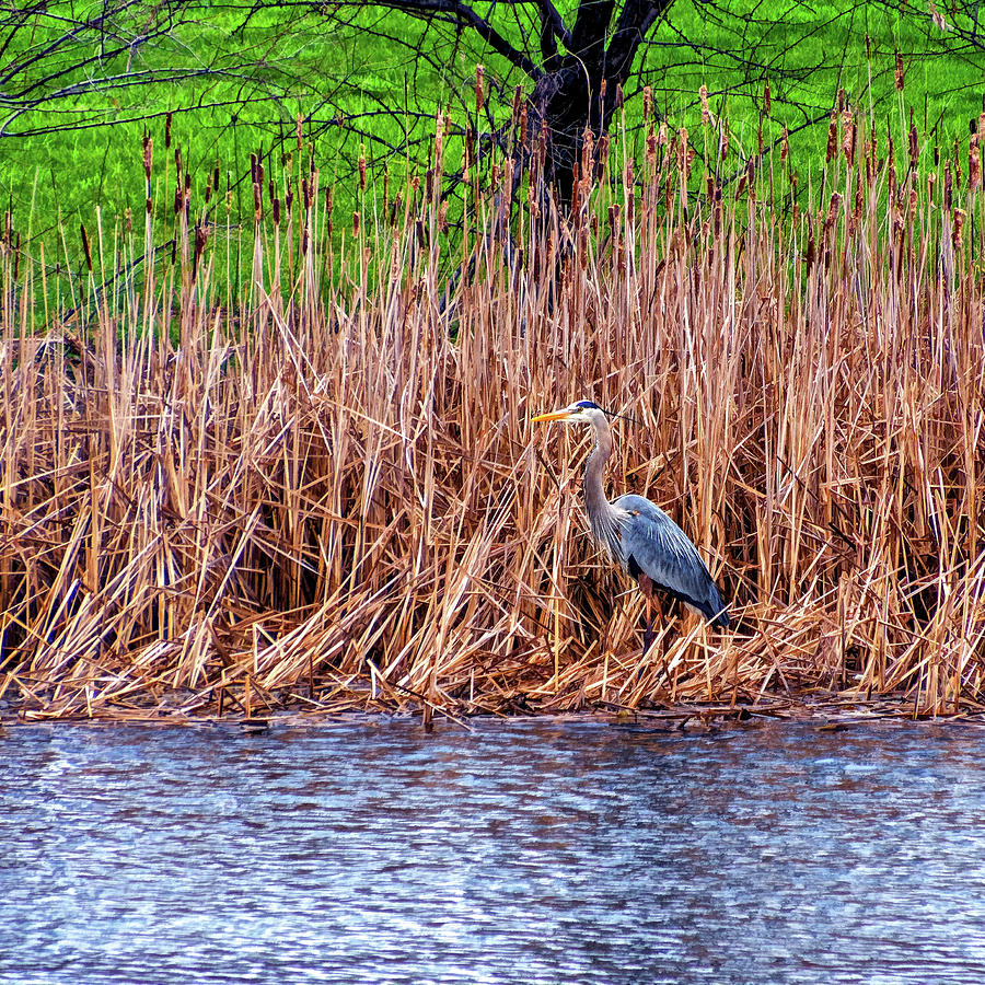 Nesting Great Blue Heron - Paint Photograph