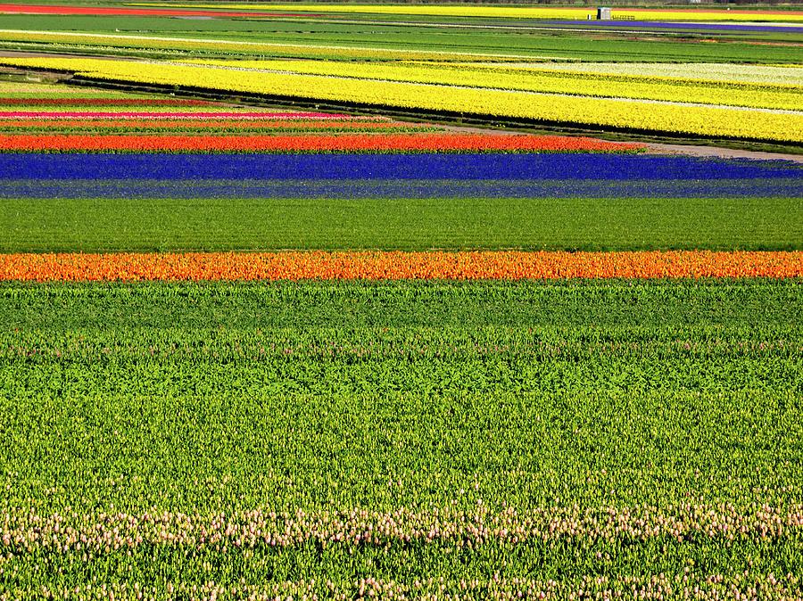 Abundant Photograph - Netherlands, Lisse by Terry Eggers