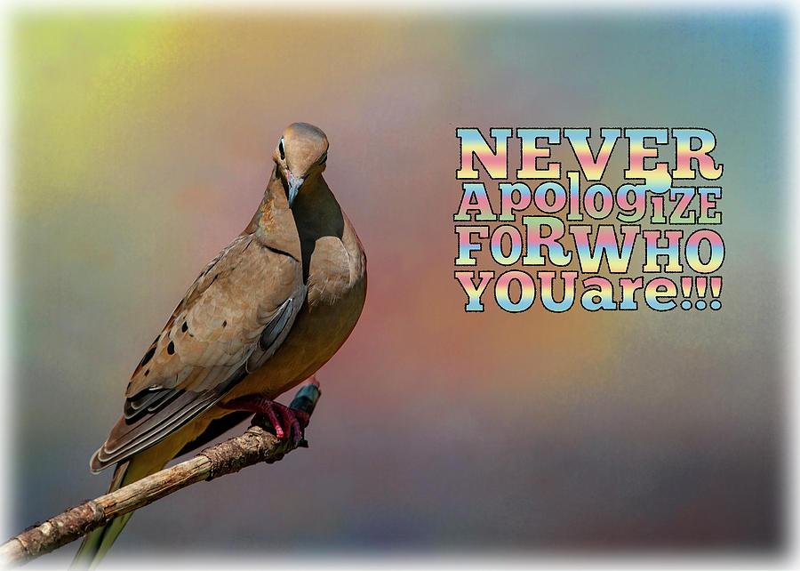 Never Apologize by Cathy Kovarik