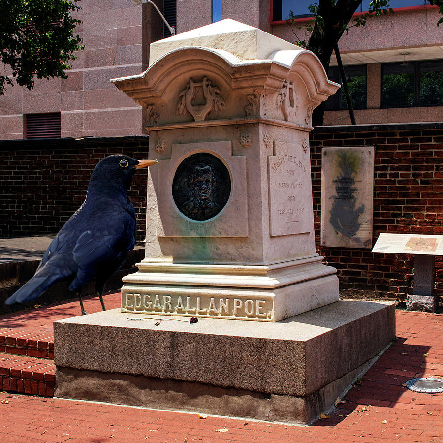 Nevermore Quoth the Raven by Bill Swartwout Fine Art Photography