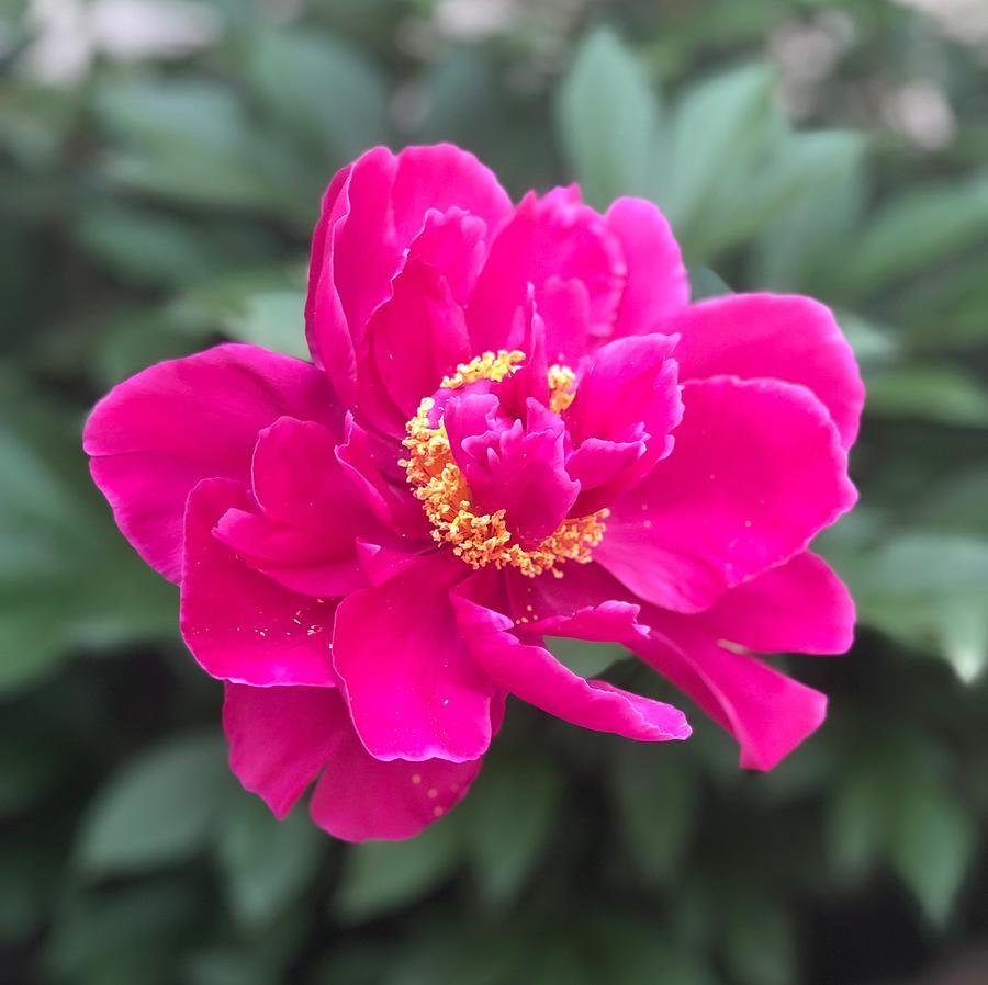 New Blossom by Mario MJ Perron
