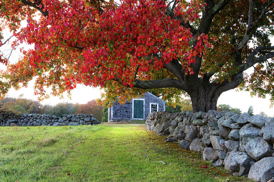New England Autumn by Steven David Roberts
