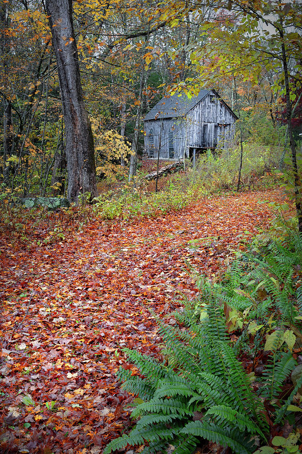 New England Autumn Woods by Bill Wakeley