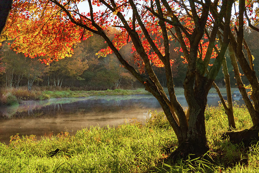New England Fall foliage in mist by Jeff Folger