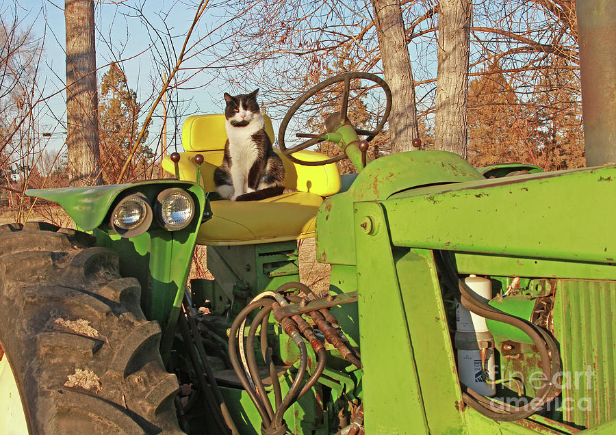 Barn Cat Photograph - New Hired Hand by Gary Wing