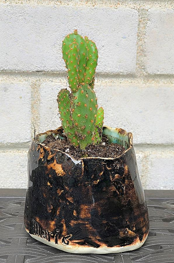 New Home for the Prickly Pear by Mario MJ Perron