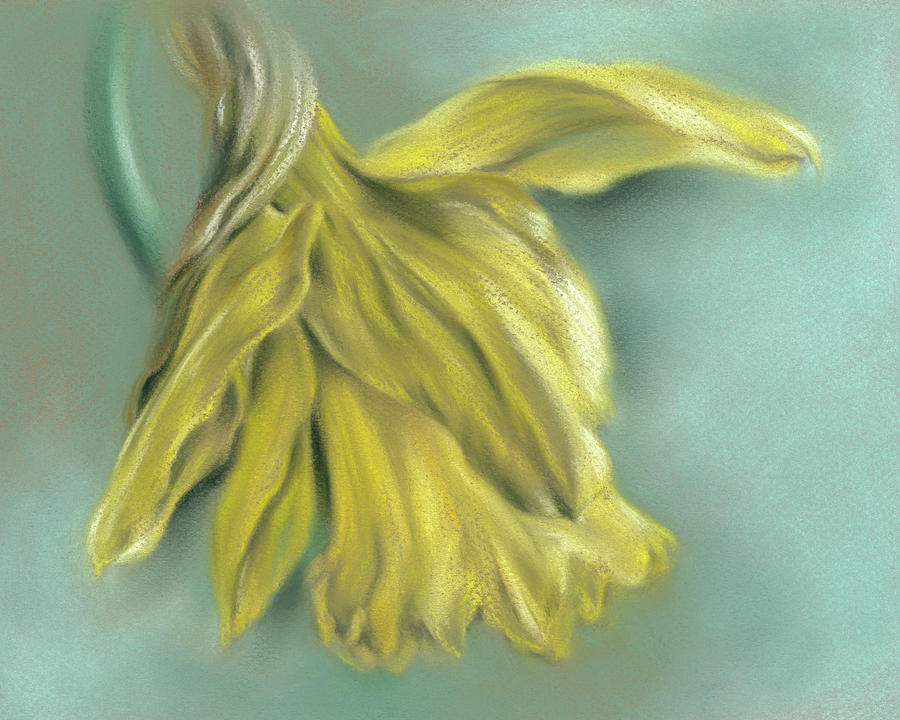 Newly Blossoming Yellow Daffodil by MM Anderson