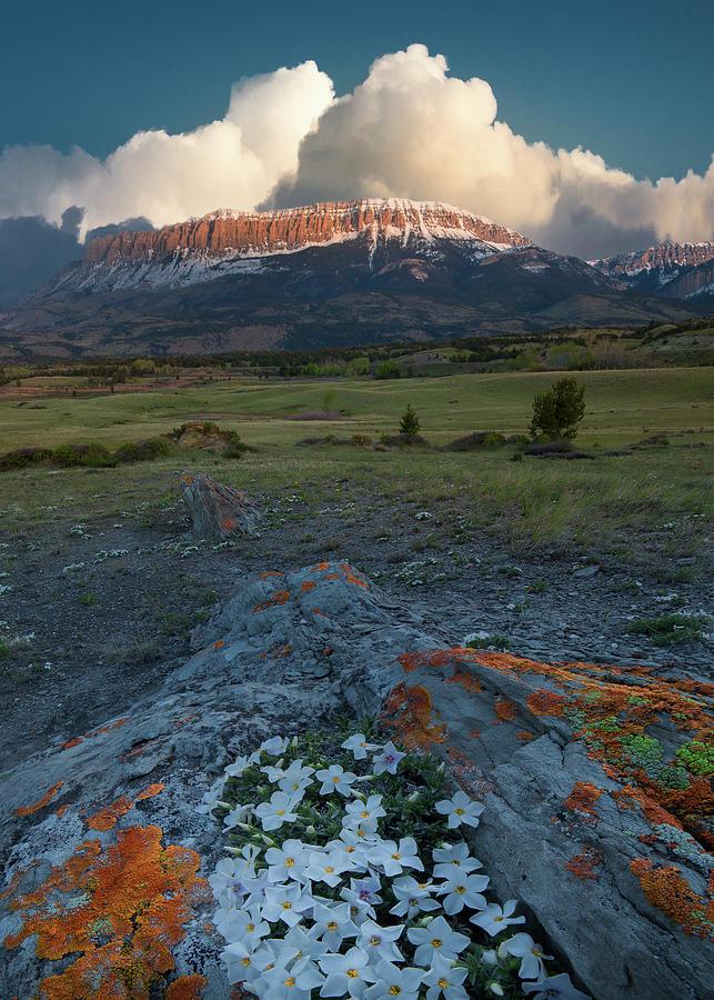 Newly Sprung / Augusta, Montana  by Nicholas Parker