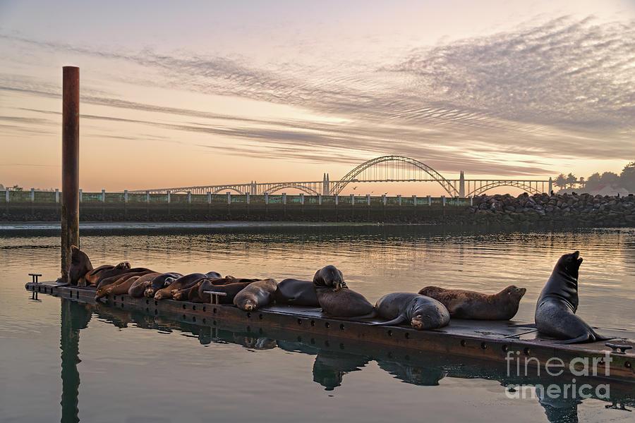 Newport Sea Lions by Craig Leaper