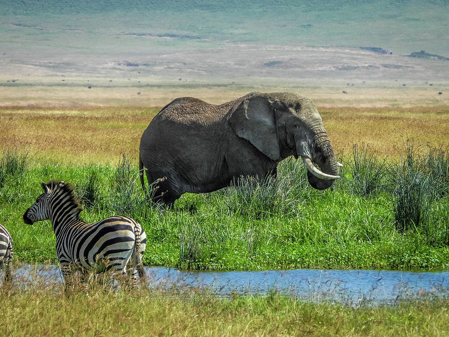 NGORONGORO CRATER FLOOR by Elie Wolf
