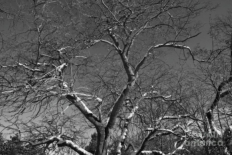 Wny Photograph - Niagara Falls Winter Textures by Tony Lee