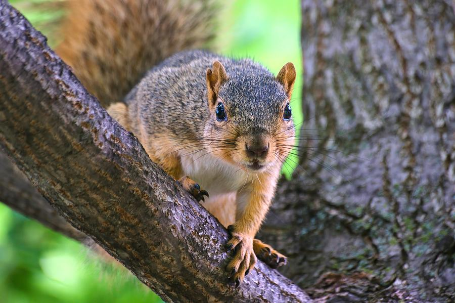 Nice Fingers Mr. Squirrel by Don Northup