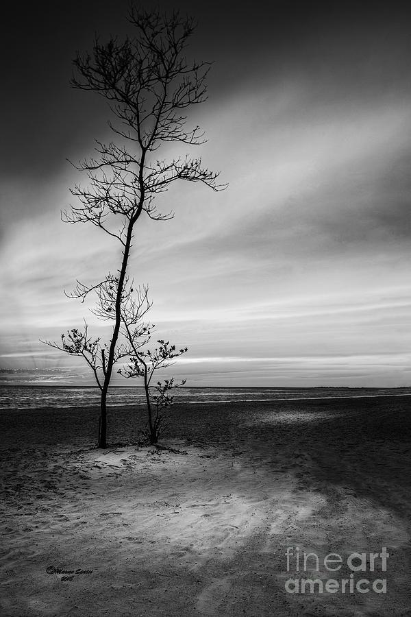 Coast Photograph - Night Fall by Marvin Spates