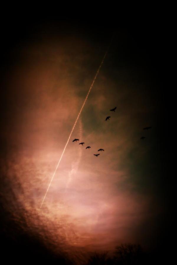 Night Flight by Mark Salamon