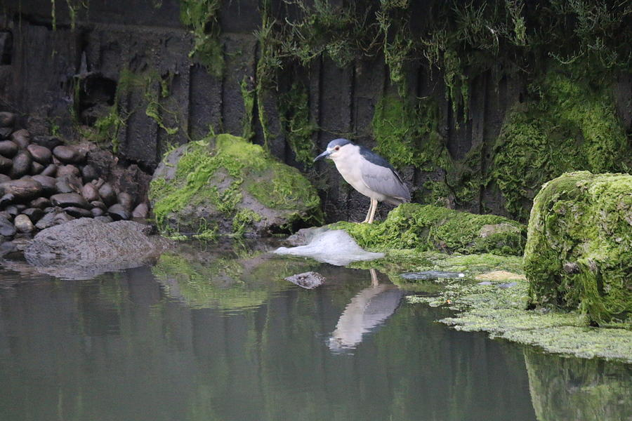 Night Heron  by Christy Pooschke