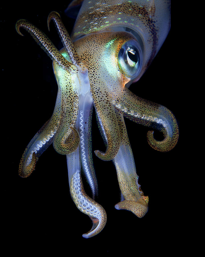 Night Observer Photograph by Nature, Underwater And Art Photos. Www.narchuk.com