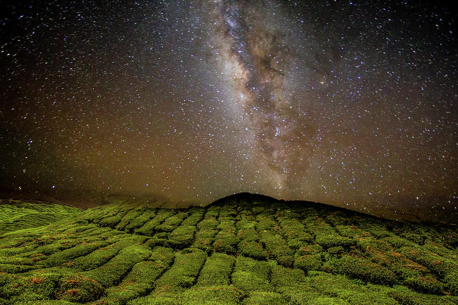 Night Sky Over Tea Plantation Photograph by By Tourtrophy