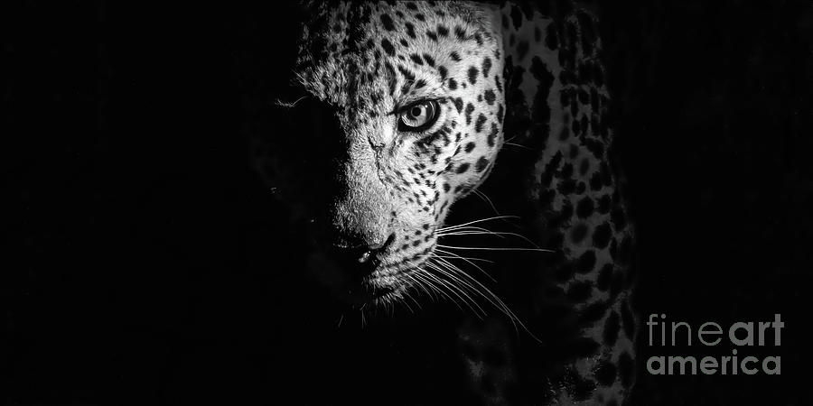 Night Stalker Black and White by Jennifer Ludlum