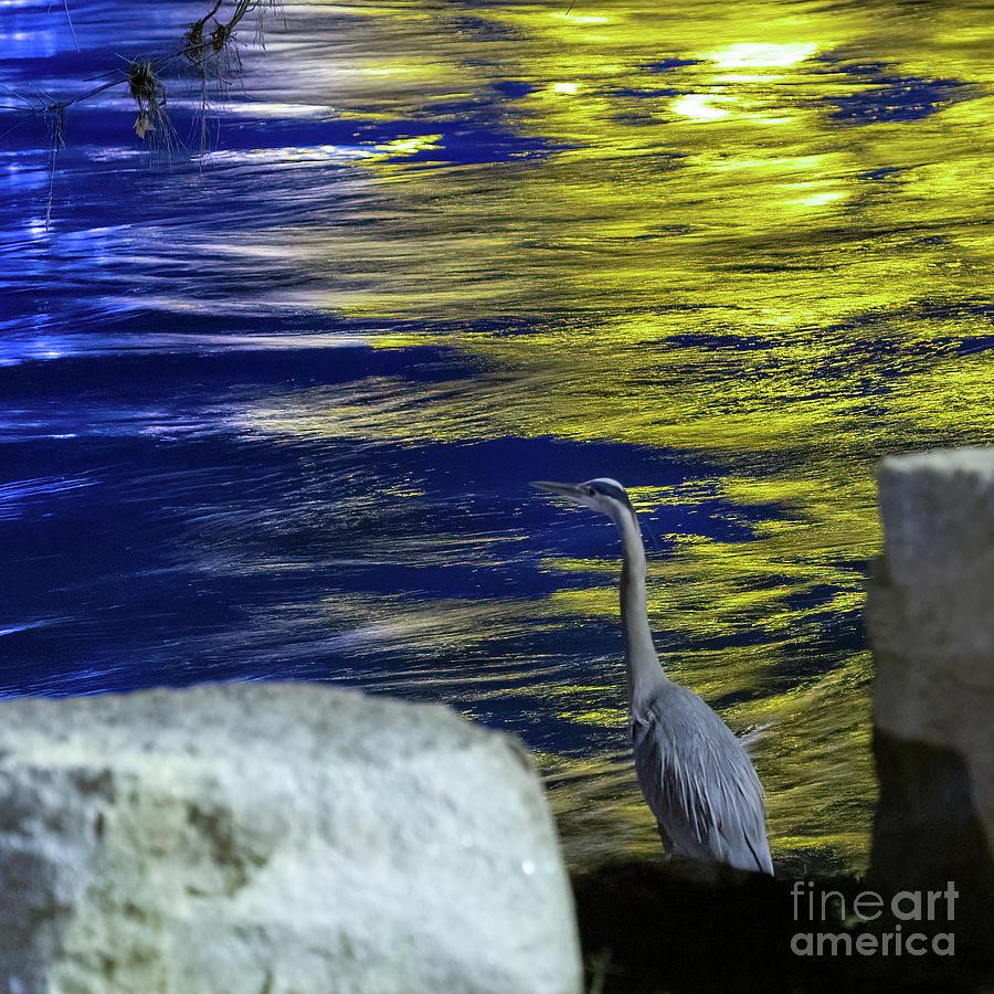 Night Stalker by Charles Hite