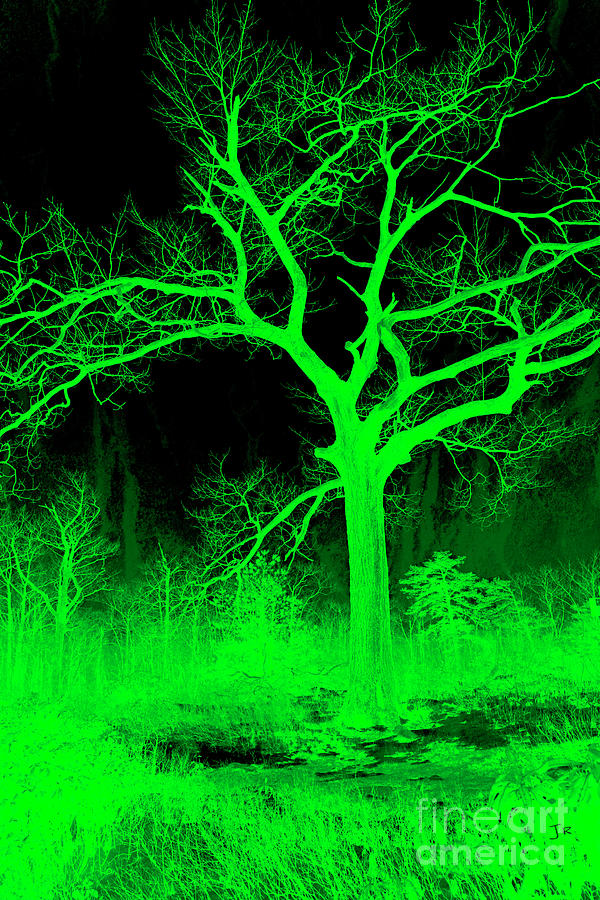 Night Vision Mystical Forest Photograph