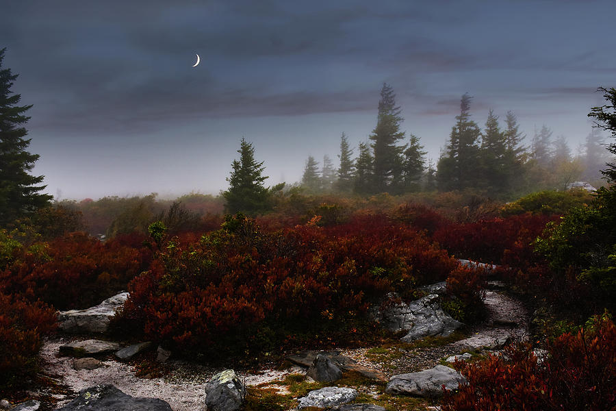 Night Whispers by Lj Lambert