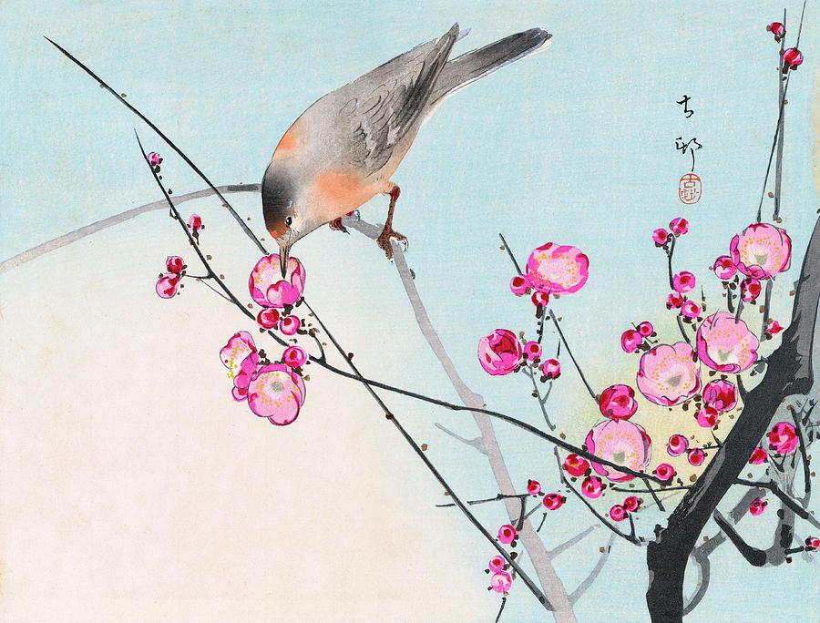 Koson Painting - Nightingale by Koson