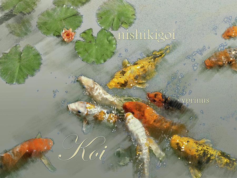 Nishikigoi 2 Graphic by Mark Mille