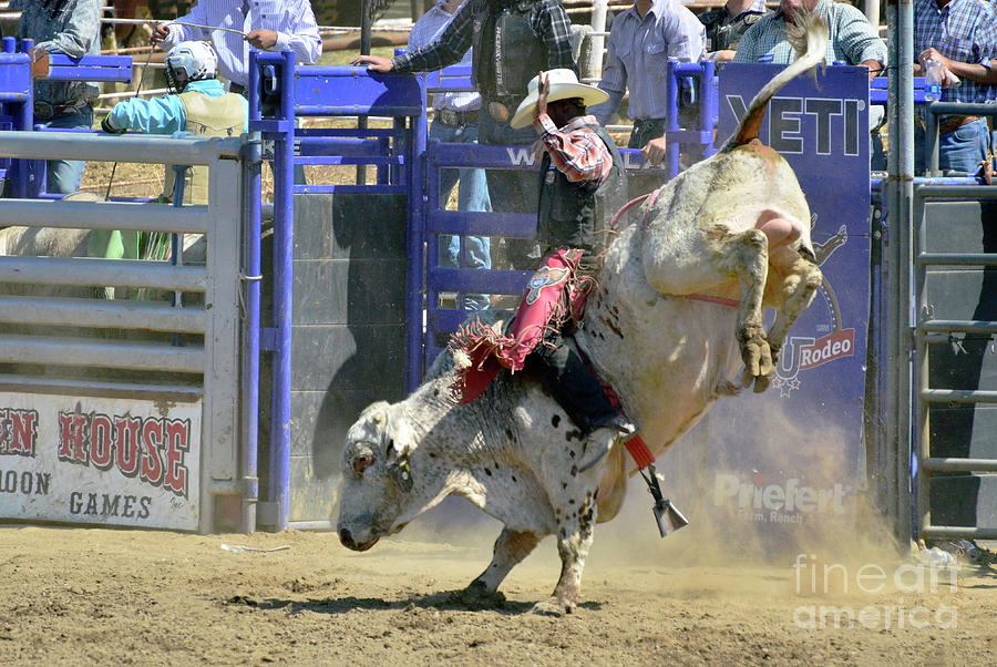 Rodeo Photograph - No Bull by Debby Pueschel