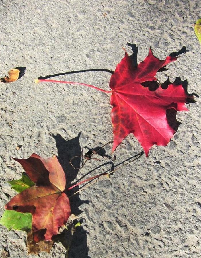 No shadow of a doubt....It is Autumn by Rosita Larsson