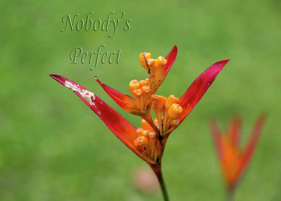 Flower Photograph - Nobodys Perfect by Betsy Knapp