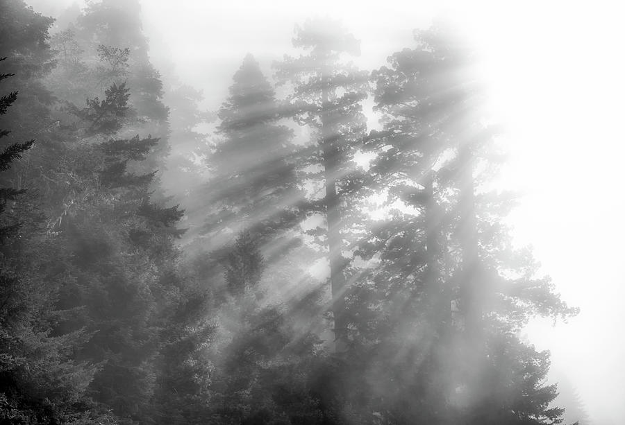NorCal Redwoods #1 by Joseph S Giacalone