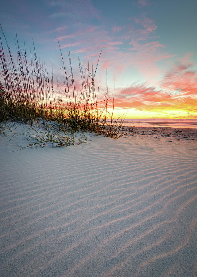 Clearwater Photograph - North Beach Dunes by Clay Townsend