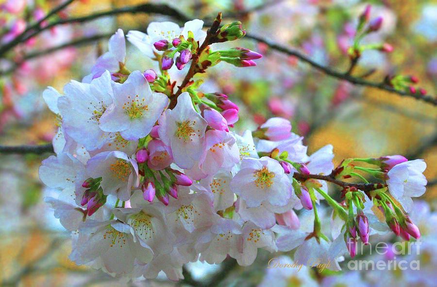 North Carolina Spring by Dorothy Pugh
