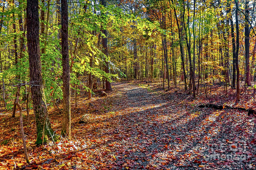 Nature Photograph - North Forest Path by James Foshee