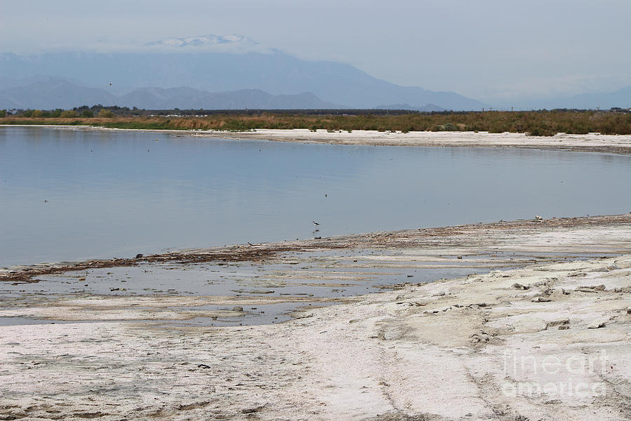 North Shore of Salton Sea by Colleen Cornelius