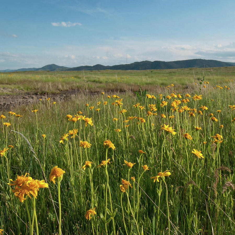 North Table Mountain Wetland Wildflower Landscape by Cascade Colors