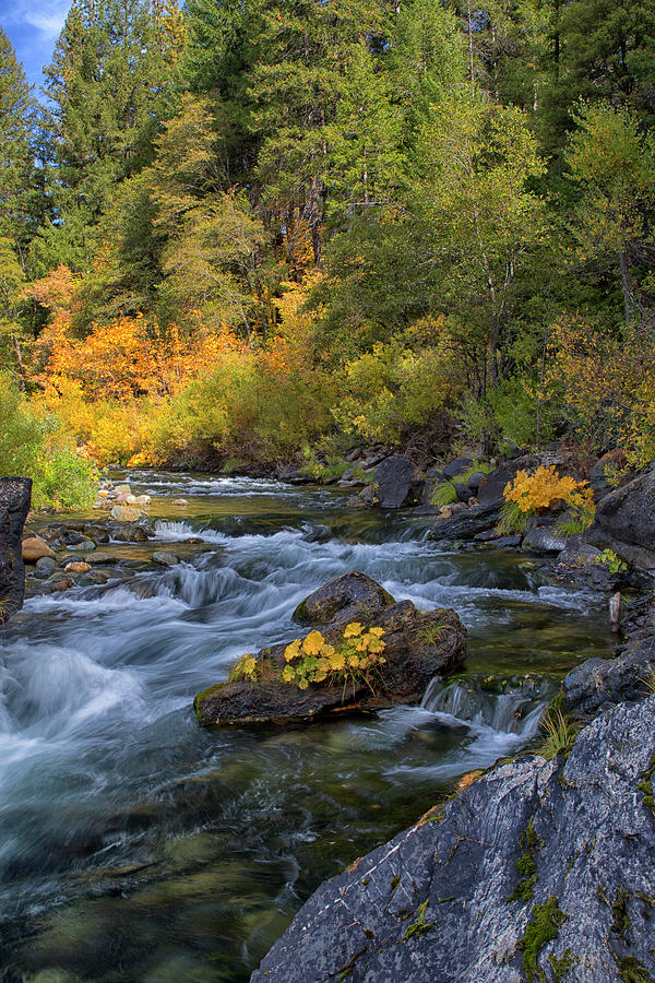 North Yuba River 5250 by Tom Kelly
