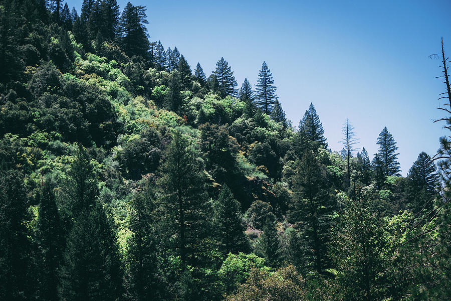 Northern California Magic by Flyinghorsedesigncom Photography