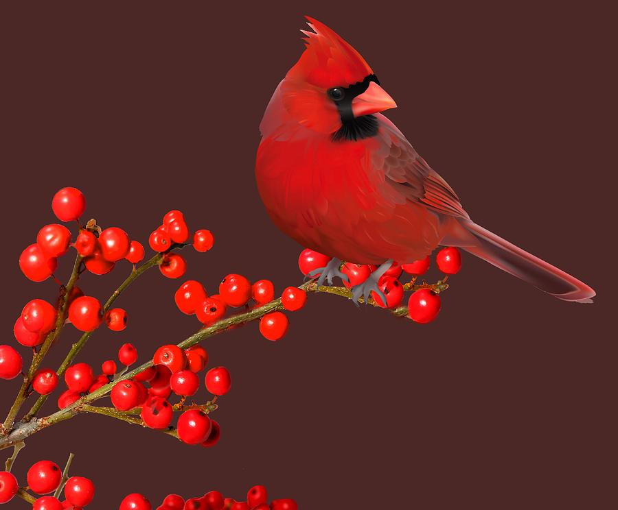 Northern Cardinal  by Cynthia Leaphart