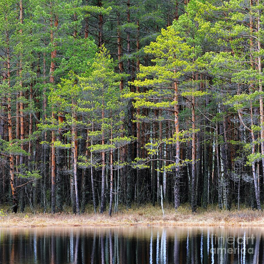 Woodland Photograph - Northern Forest Landscape With A Lake by Aleksey Stemmer