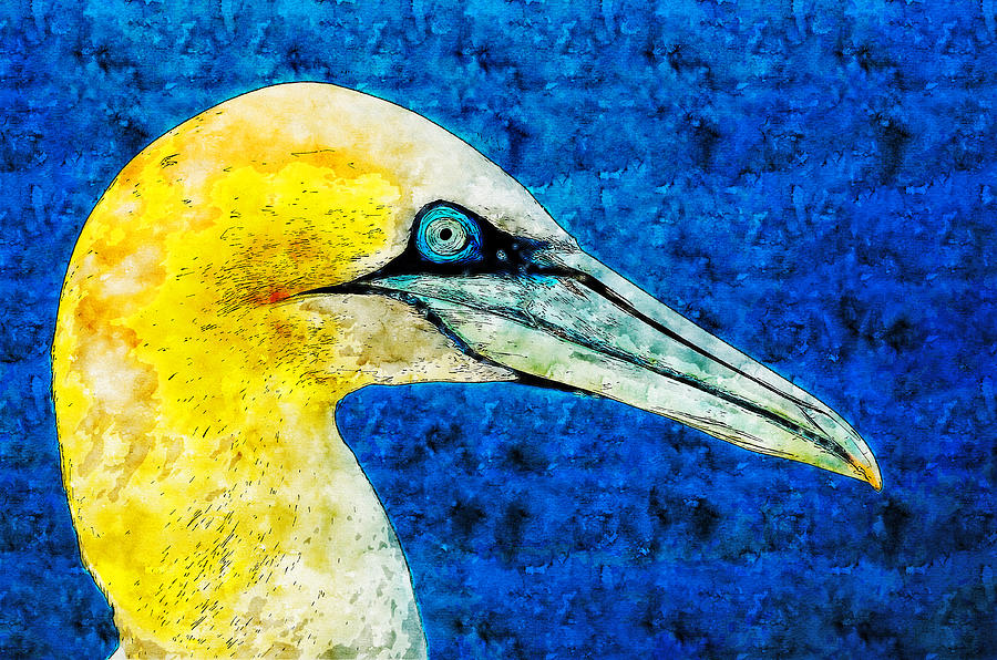 America Drawing - Northern Gannet Watercolor Drawing by Hasan Ahmed