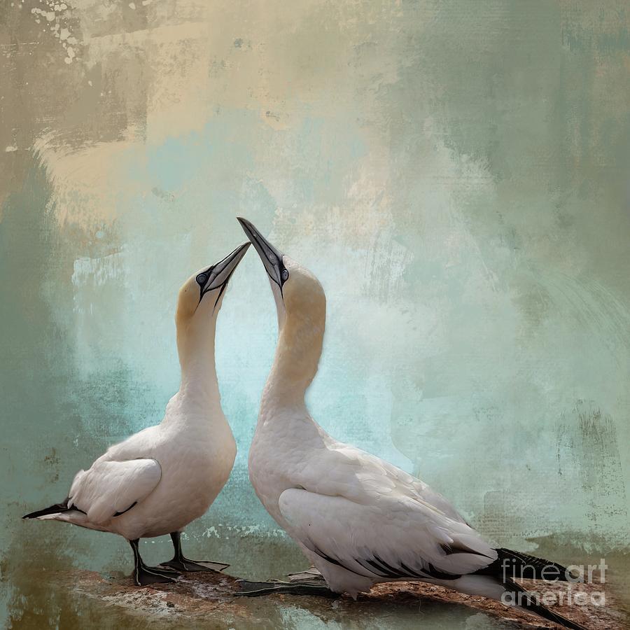 Northern Gannets by Eva Lechner