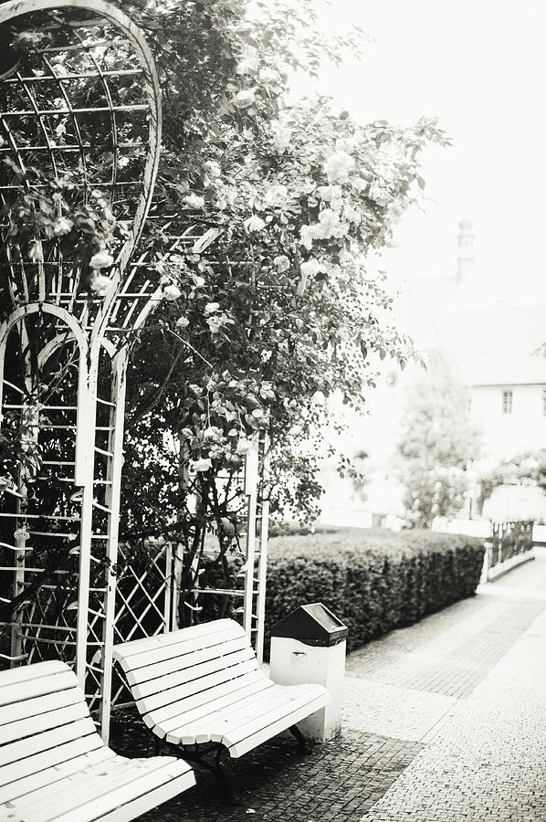 Nostalgic Roses of Franciscan Garden BW 1 by Jenny Rainbow