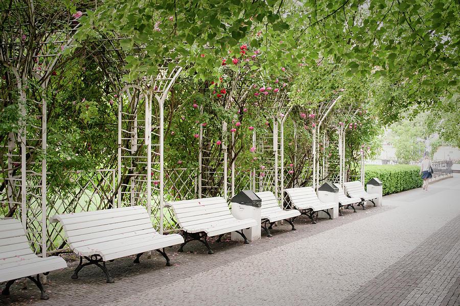 Nostalgic Roses of Franciscan Garden by Jenny Rainbow
