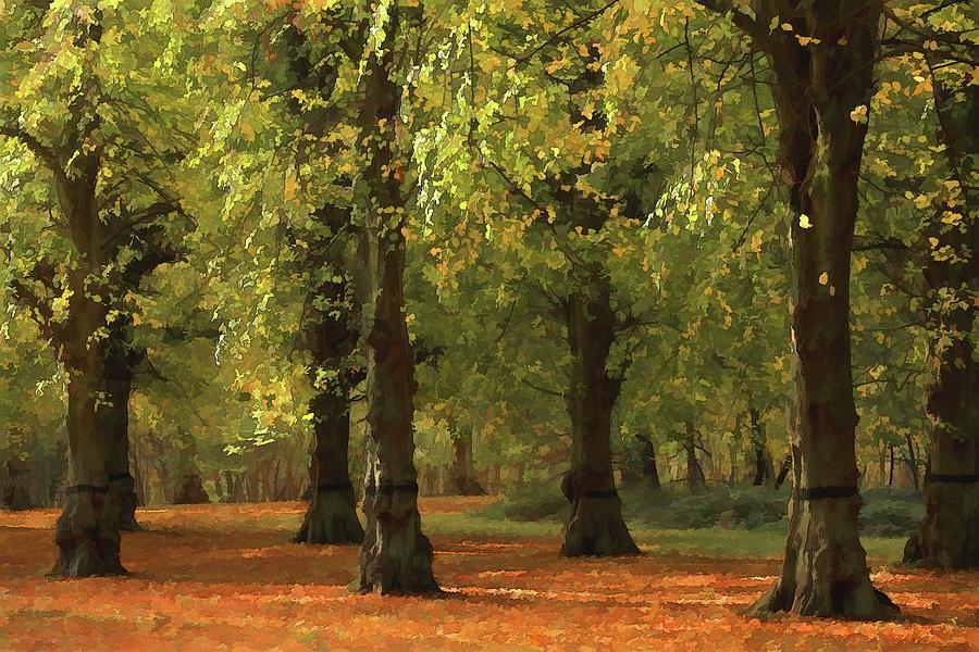 Nottinghamshire, England, Uk, Clumber Photograph by Chris Upton